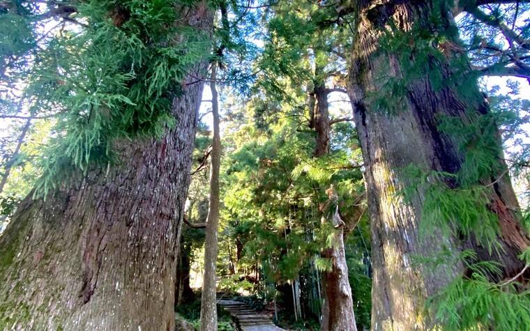 The Kumano Kodo pathway. We hiked the ancient Kumano trails in between playing golf in Wakayama, Japan.