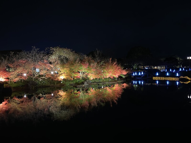 Fall foliage at the Nabana no Sato flower park at night in Mie prefecture, Japan